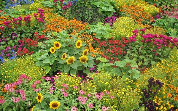 Hecho por el hombre Jardín Flor Colorful Girasol Yellow Flower Purple Flower Pink Flower Red Flower Fondo de pantalla HD | Fondo de Escritorio