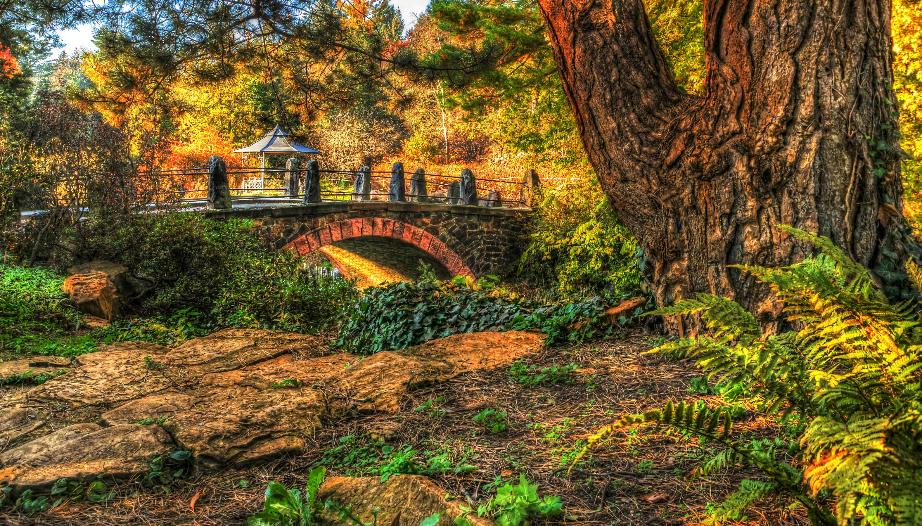 Bridge In Autumn Park Hd Wallpaper Background Image