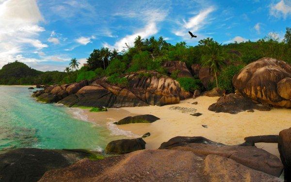 Tierra/Naturaleza Playa Seychelles Rock Palmera Fondo de pantalla HD | Fondo de Escritorio