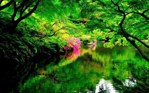 Man Made Japanese Garden Park Spring Reflection Tree Flower Green HD Wallpaper | Background Image