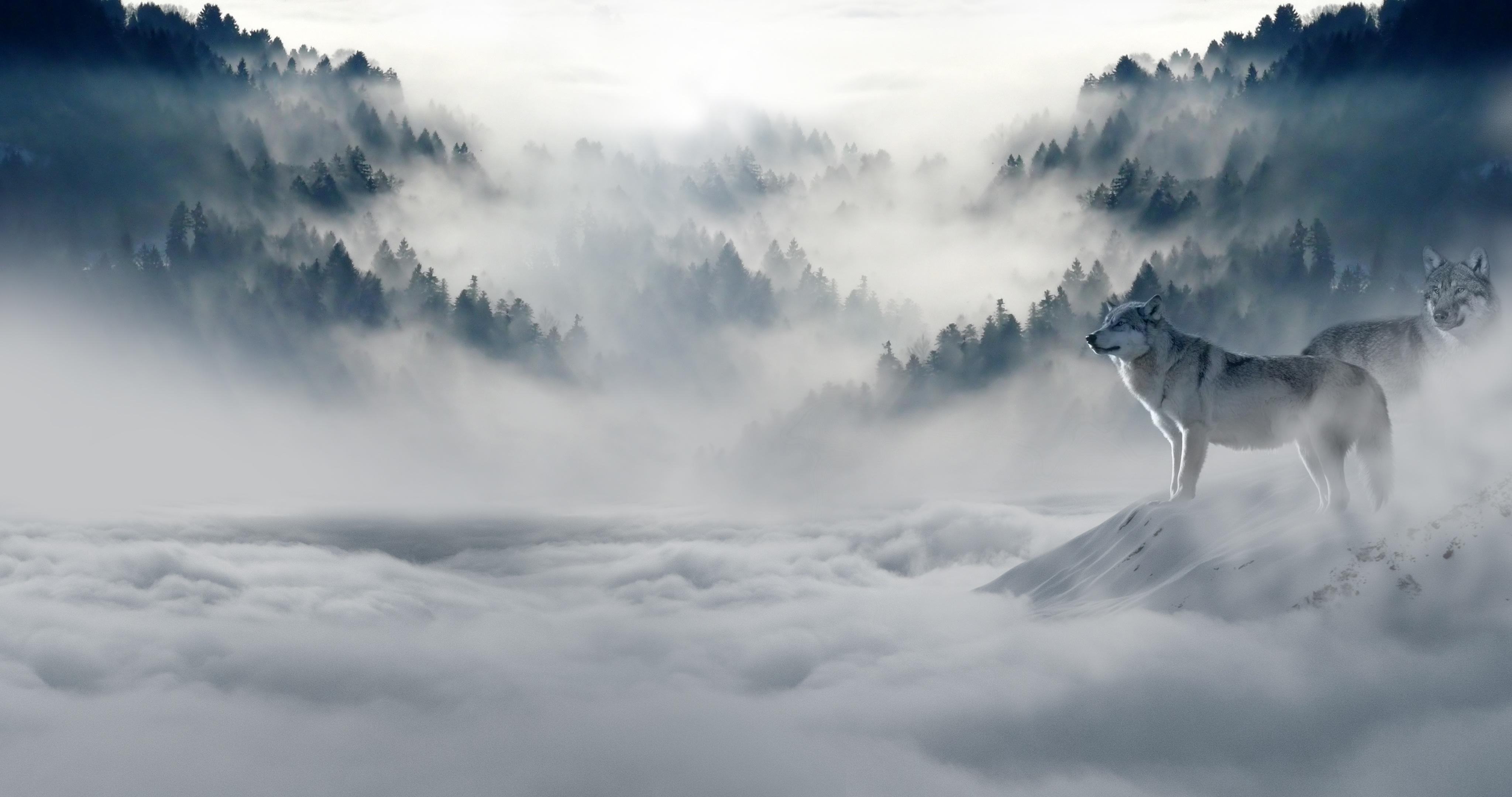 Wolves high above the mist of the clouds in a spiritual world 4k ultra fond d 39 cran hd arri re - 4096x2160 wallpaper ...