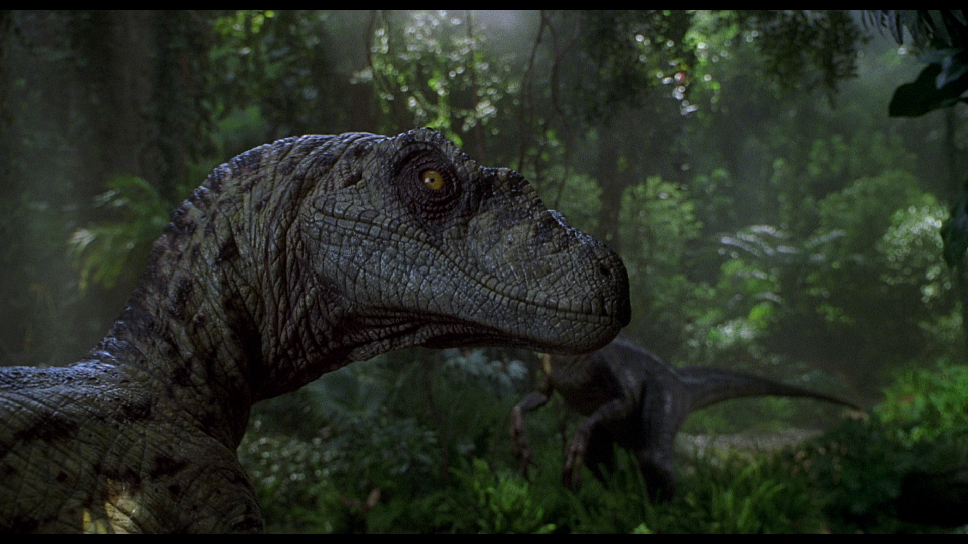Jurassic Park Wallpaper × Jurassic Park Wallpapers