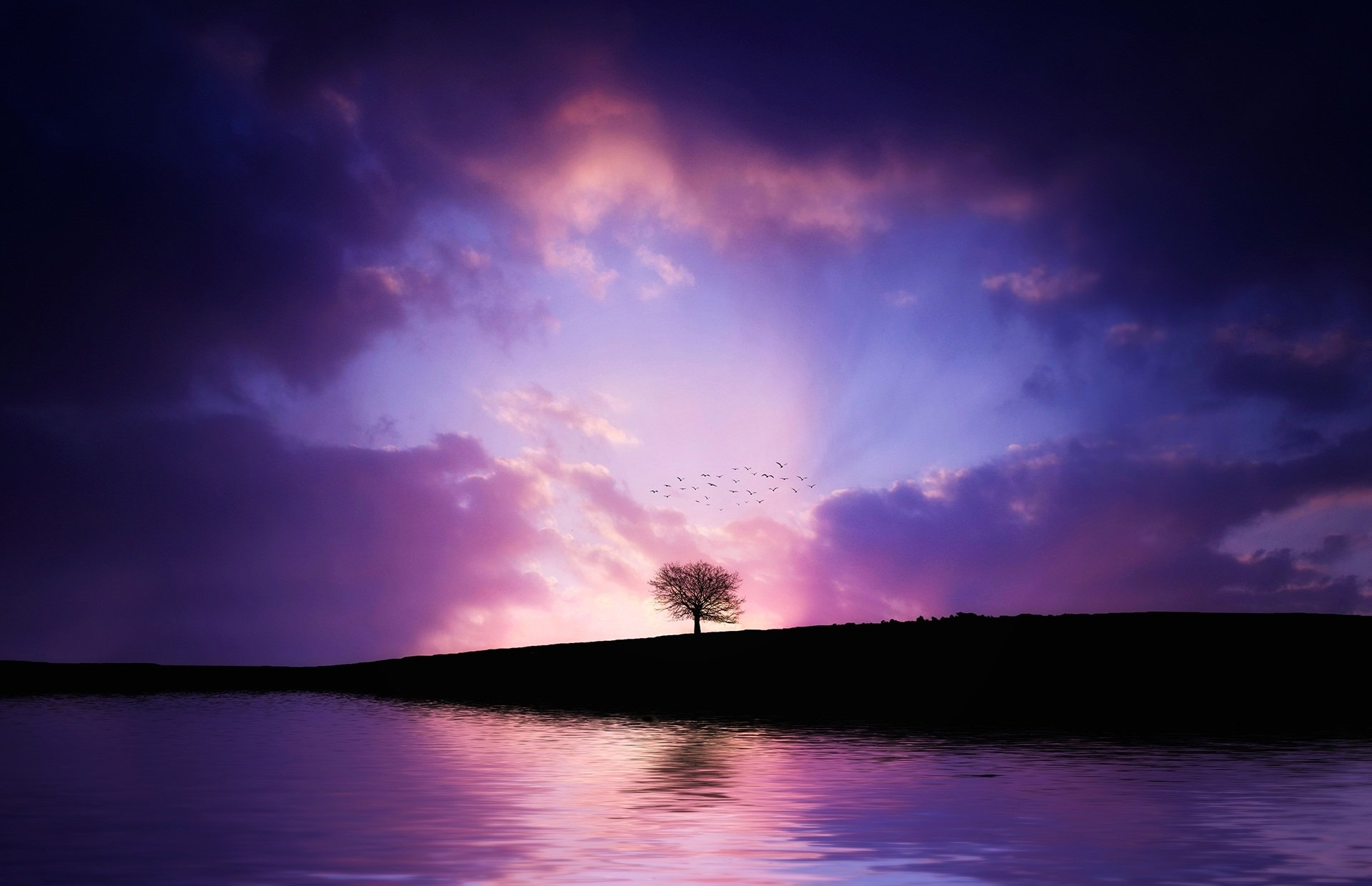 Earth - Tree  Lonely Tree Colors Sky Earth Cloud Light Bird Nature Artistic Purple Sunset Silhouette Lake Wallpaper