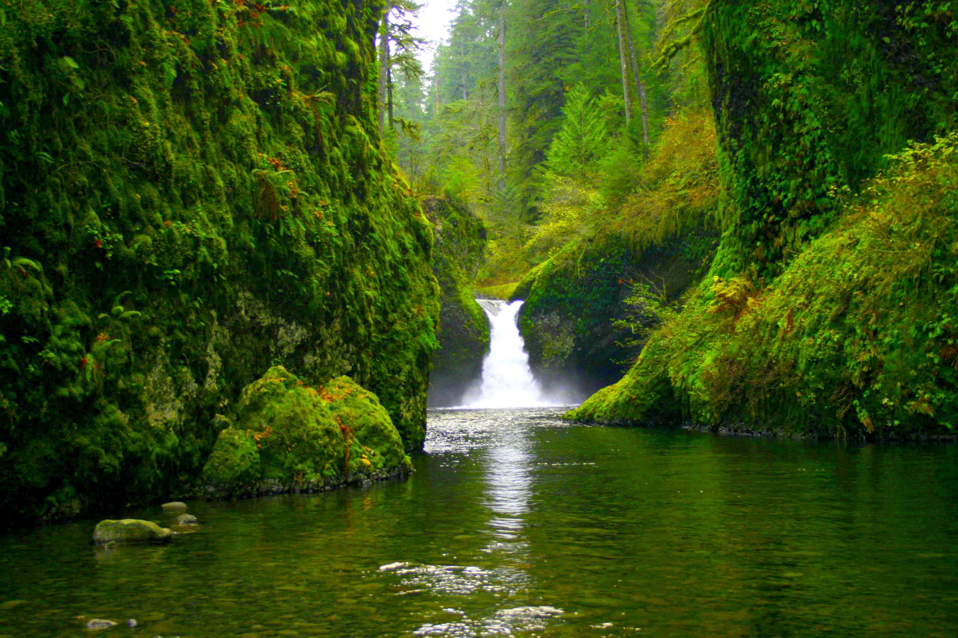 Waterfall In Green Forest 4k Ultra HD Wallpaper