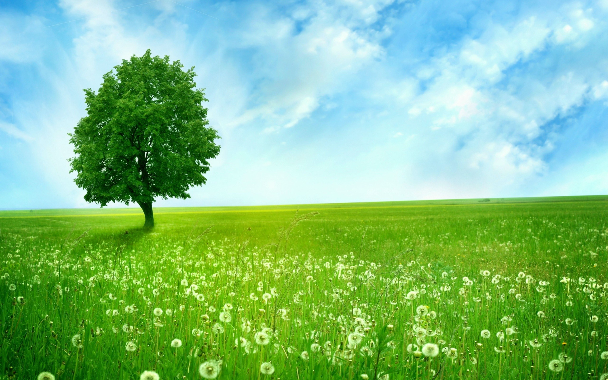 green tree in dandelion field full hd wallpaper and background image
