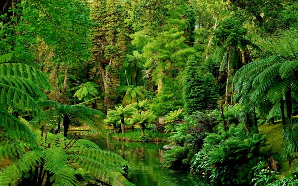 Earth Forest Tree Palm Tree Fern Rainforest Green Portugal HD Wallpaper | Background Image