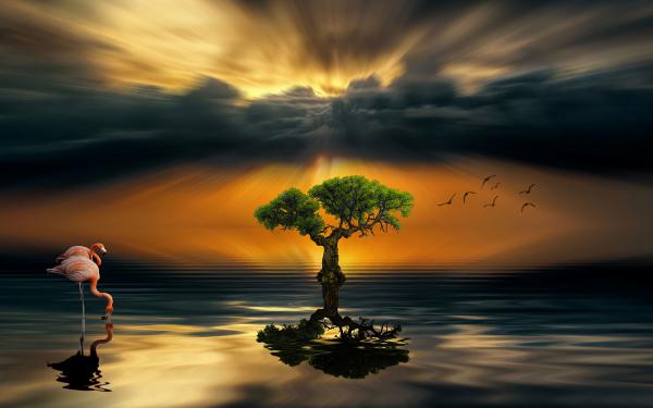 Earth Reflection Tree Bird Flamingo Sunset HD Wallpaper | Background Image