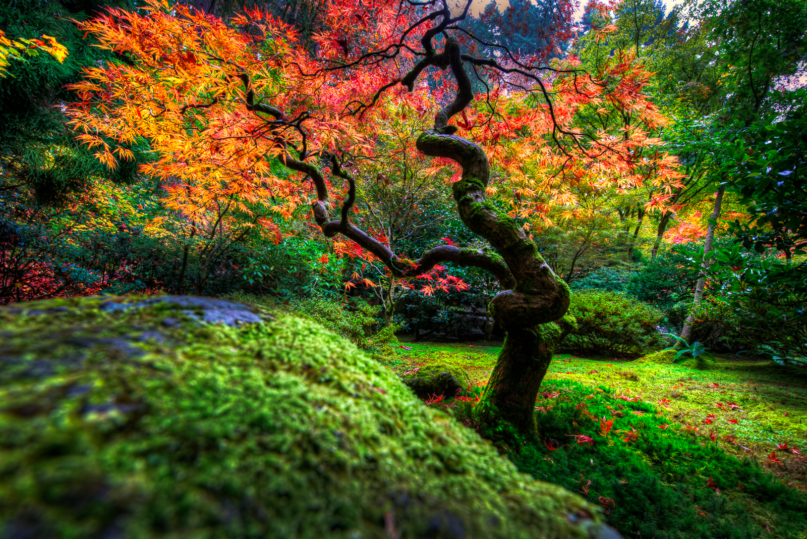 Autumn Japanese Garden Wallpaper And Background Image