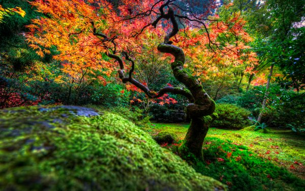 Man Made Japanese Garden Fall Foliage Tree Bush HD Wallpaper | Background Image