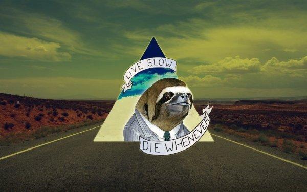 Humor Death Road Life Sloth HD Wallpaper | Background Image