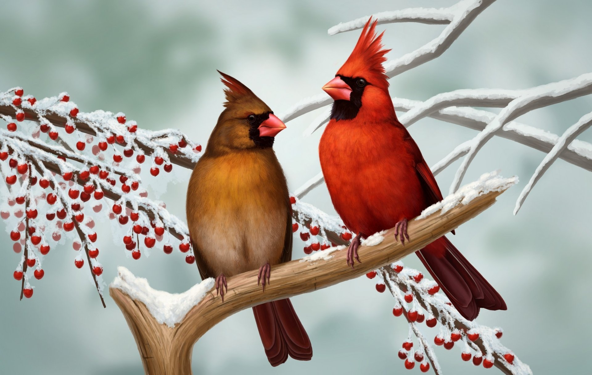 Cardinal hd wallpaper background image 2000x1268 id - Winter cardinal wallpaper ...
