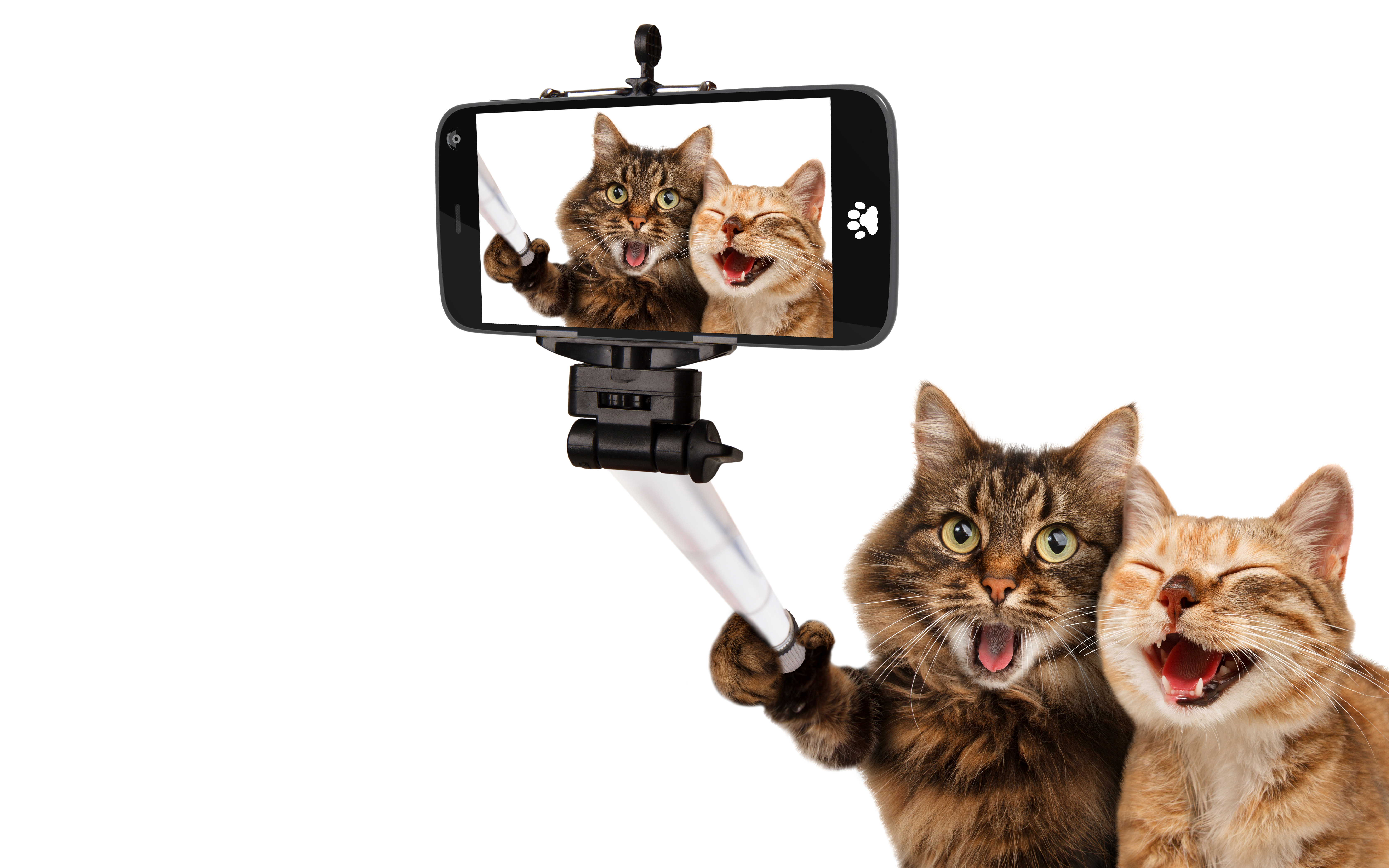 Two Cats Taking A Selfie 5k Retina Ultra Fondo De Pantalla