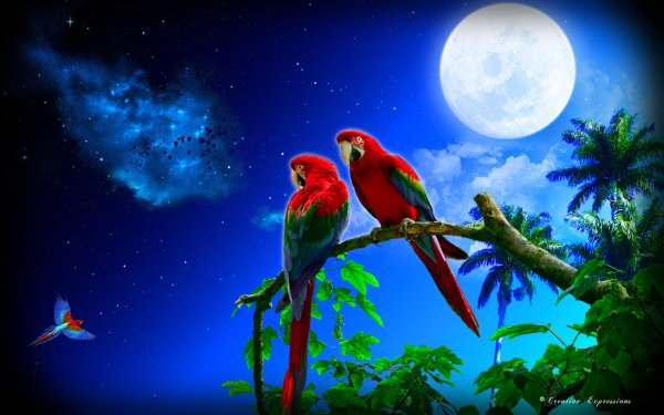 Artístico Fantasía Tropico Loro Noche Árbol Luna Fondo de pantalla HD | Fondo de Escritorio