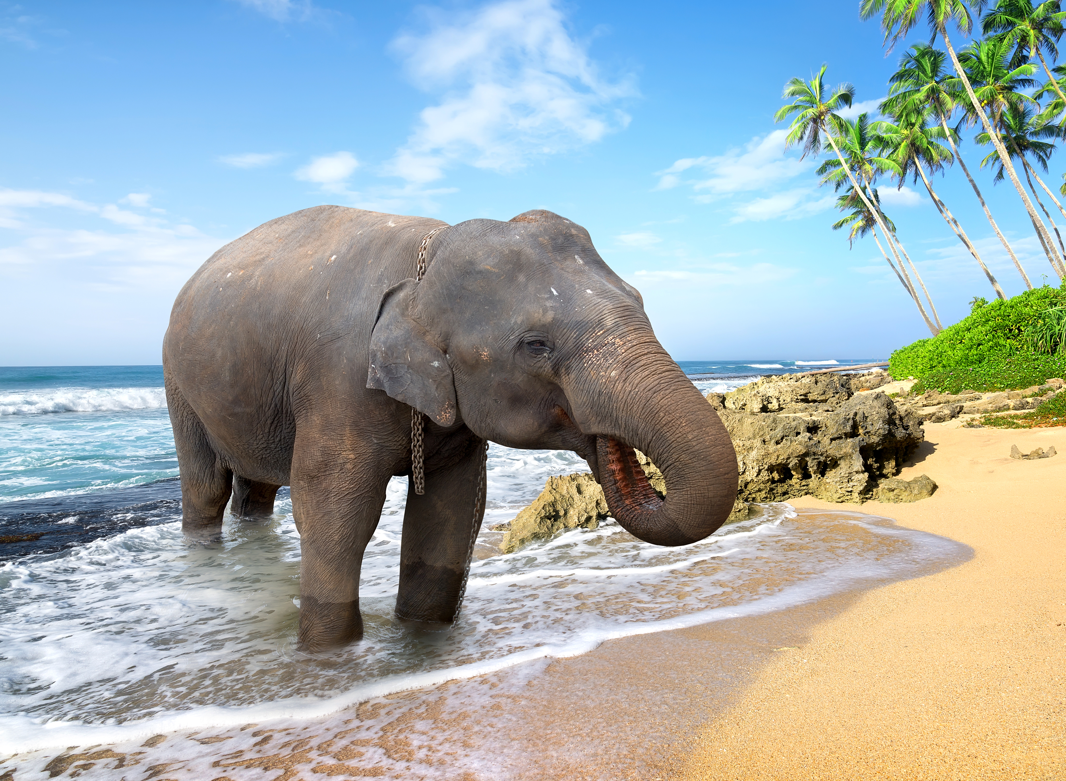 Elephant 4k Ultra HD Wallpaper   Background Image ...