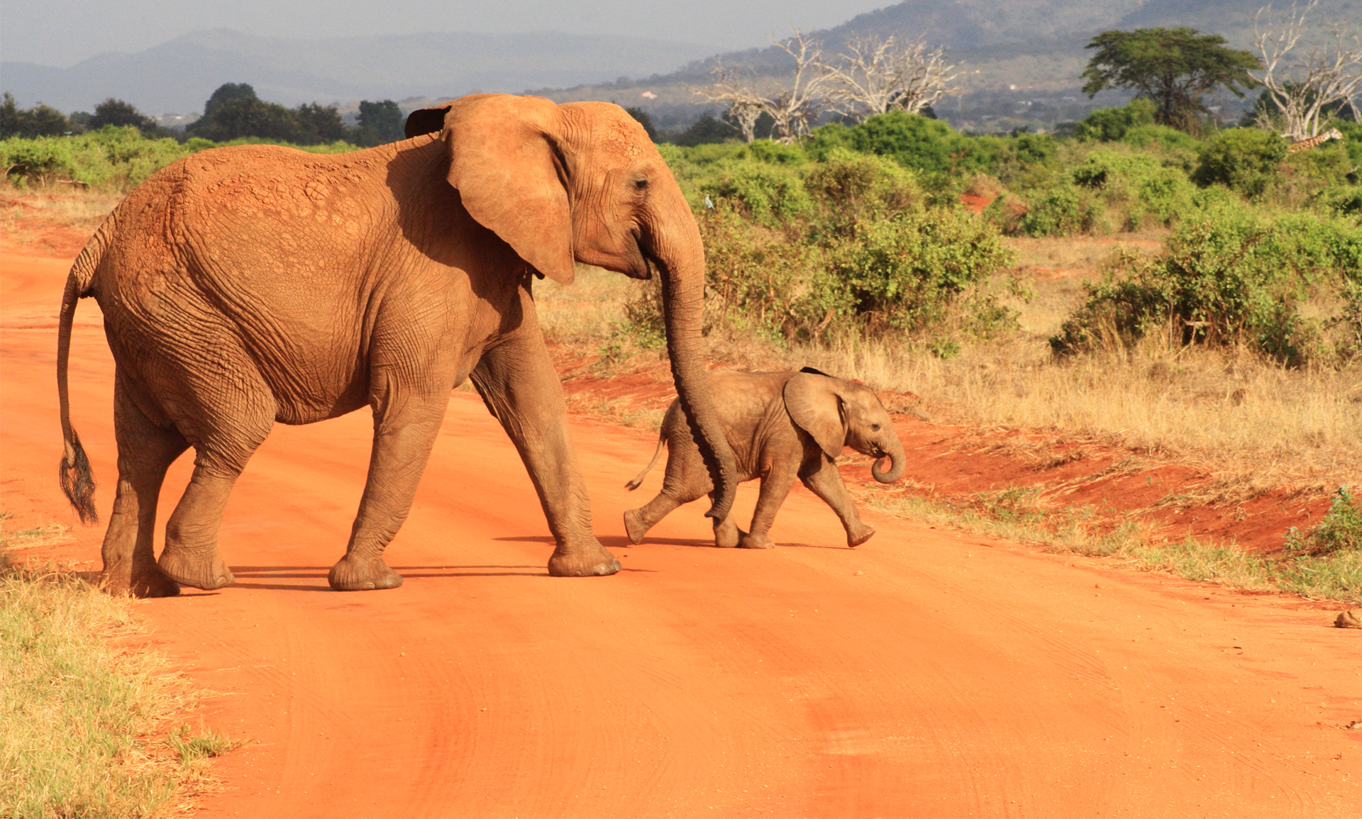 Elephant Fond D Ecran Hd Arriere Plan 1920x1155 Id