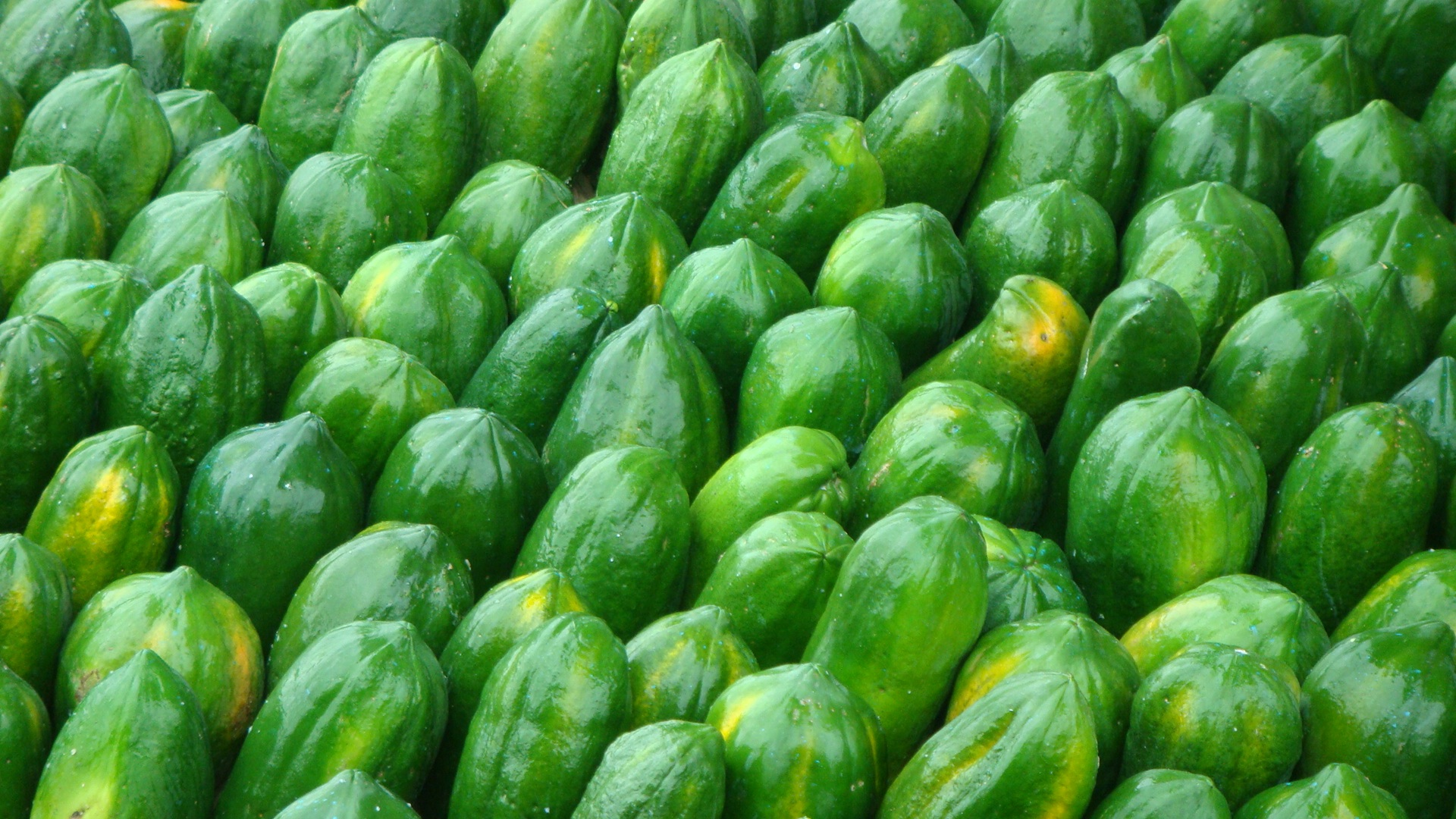 1 papaya hd wallpapers background images wallpaper abyss