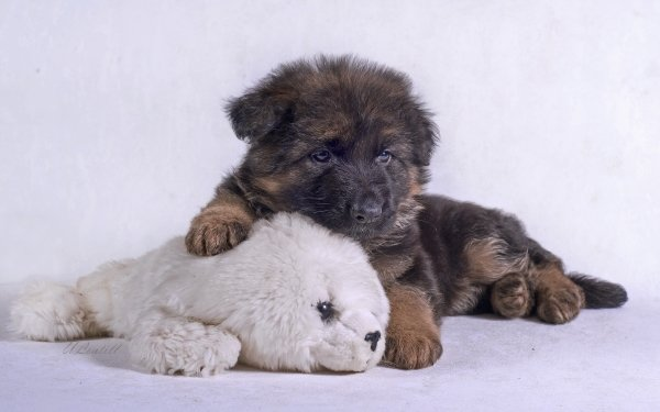 Animal German Shepherd Dogs Puppy Dog Stuffed Animal Baby Animal HD Wallpaper | Background Image