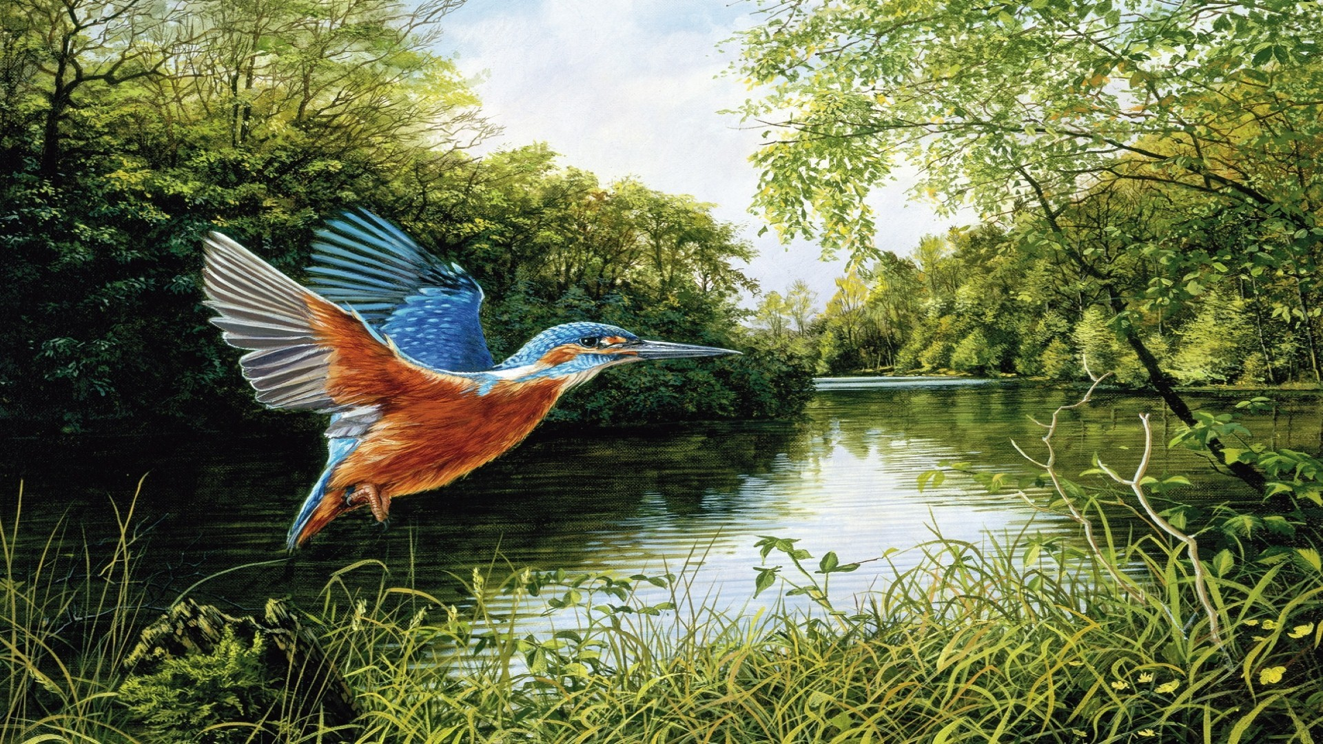 Flying Kingfisher Painting Wallpapers ID742372