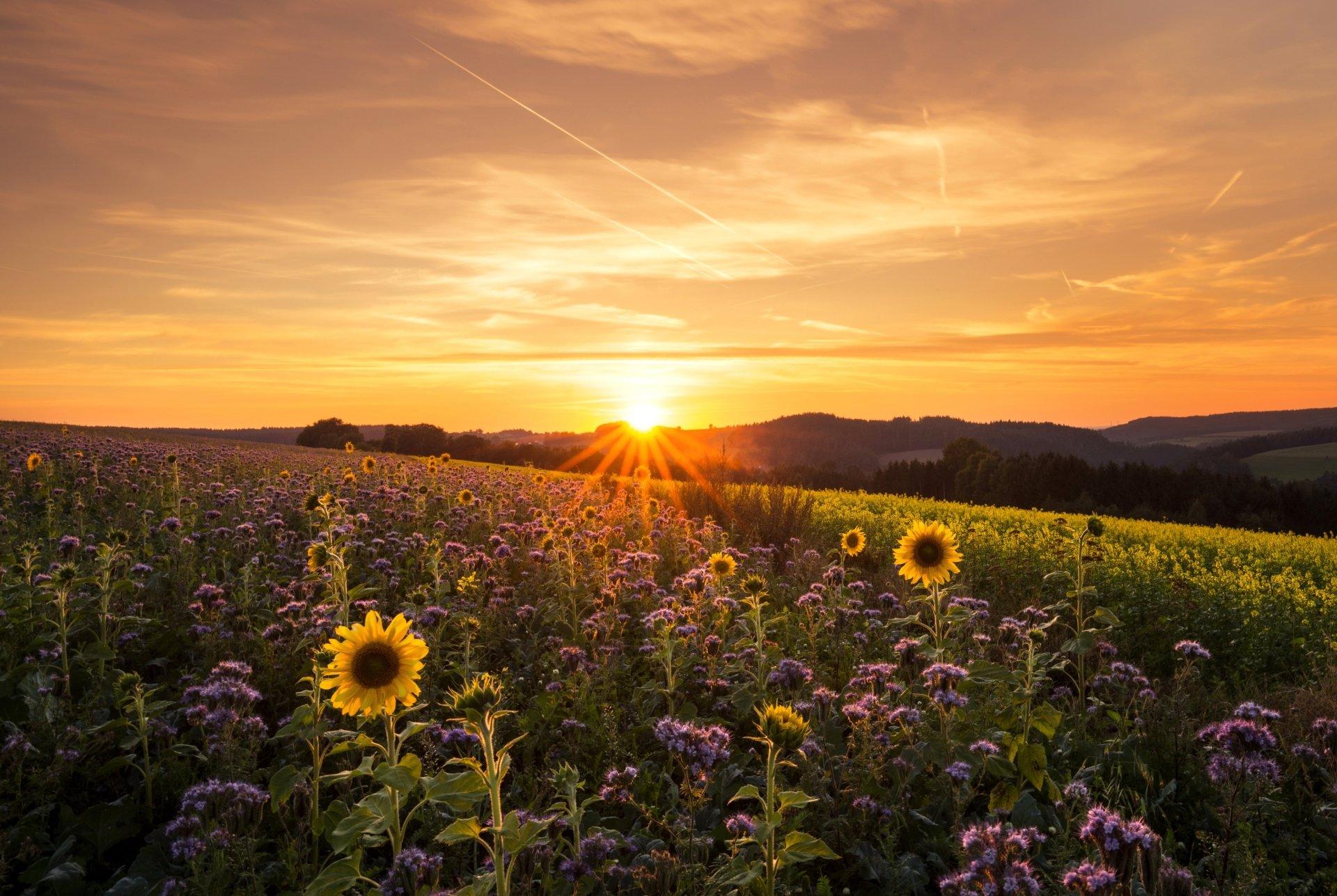 sunrise 4k ultra hd wallpaper and background image