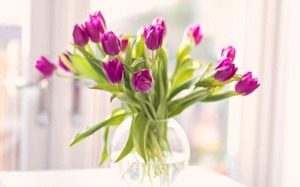 Man Made Flower Tulip Vase Pink Flower HD Wallpaper | Background Image