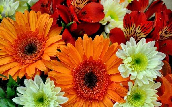 Terre/Nature Fleur Fleurs Gerbera Lys Couleurs Colorful Orange Flower Red Flower White Flower Fond d'écran HD | Image