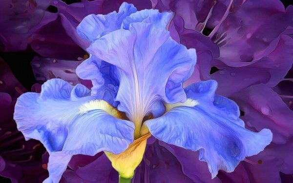 Artistic Painting Flower Iris Blue HD Wallpaper   Background Image