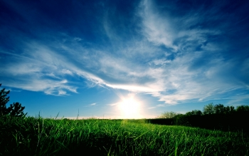 Earth - Grass Wallpapers and Backgrounds ID : 74975