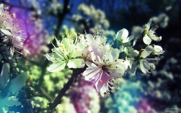 Terre/Nature Floraison Fleurs Pastel Fleur Fond d'écran HD | Image