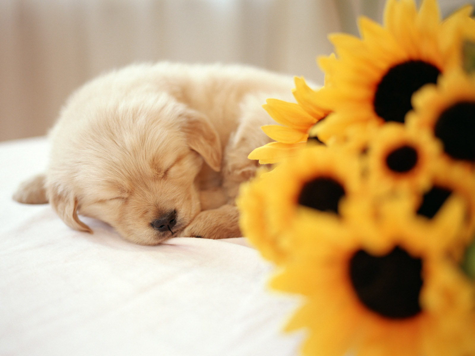 Dog Wallpaper And Background Image 1600x1200 Id 7555