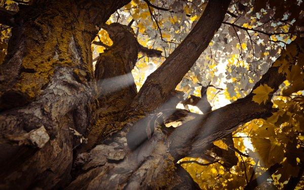 Earth Sunbeam Nature Tree Fall HD Wallpaper | Background Image
