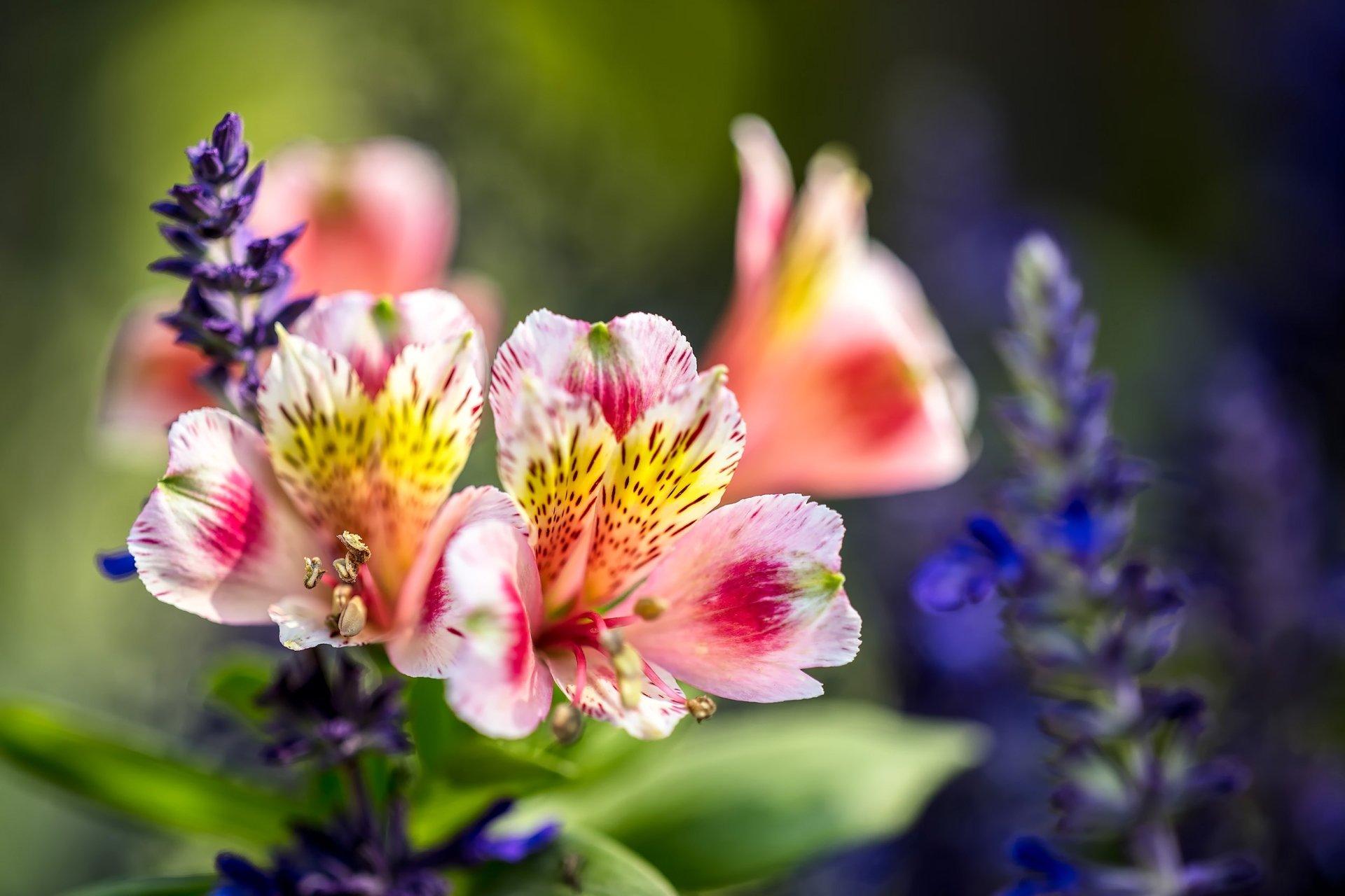 Flores Hermosas Flores Silvestres Fondos De Pantalla Gratis: Fleur Fond D'écran HD