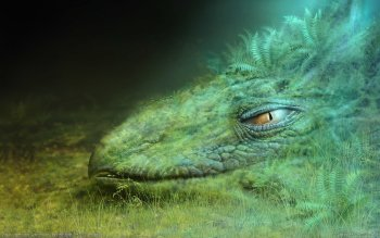 Fantasy - Creature Wallpapers and Backgrounds ID : 76447