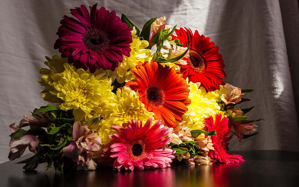 Man Made Flower Earth Gerbera Dahlia Colors Colorful HD Wallpaper | Background Image