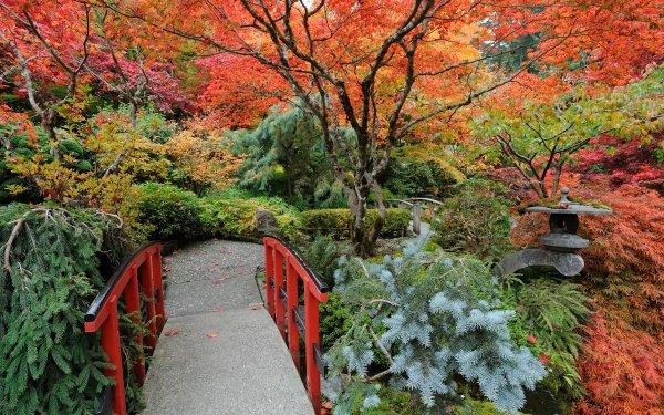 Man Made Japanese Garden Tree Fall Path Garden Bush HD Wallpaper | Background Image