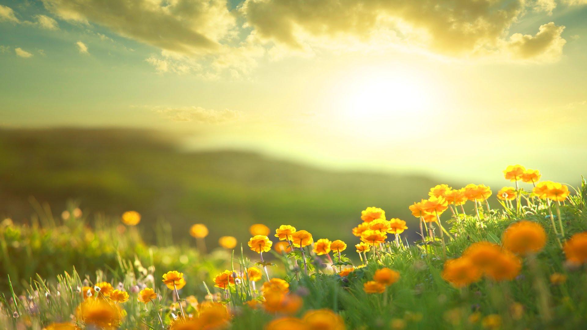 Morning Sunshine On Flowers HD Wallpaper
