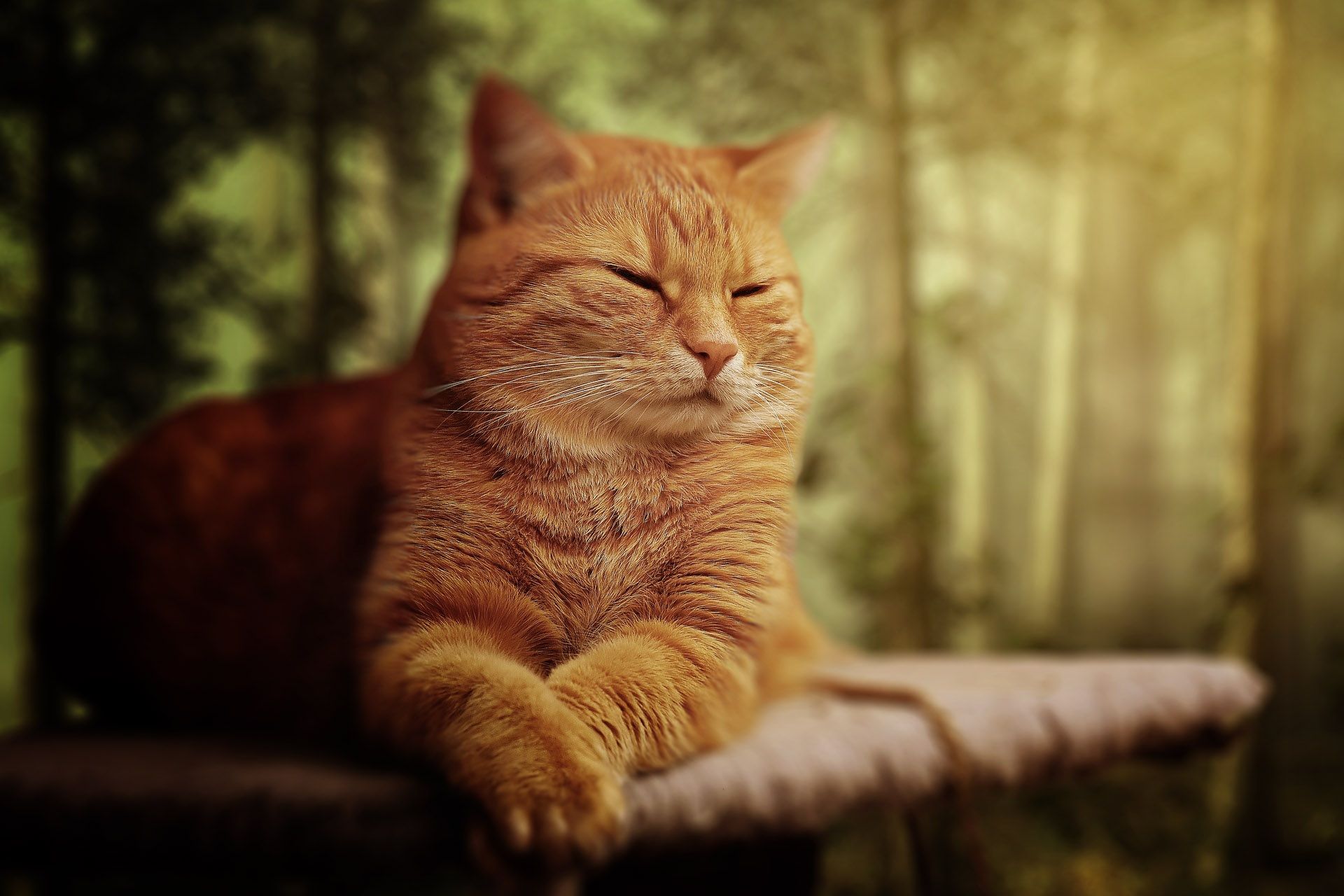 Ginger Cat Hd Wallpaper Background Image 1920x1280 Id