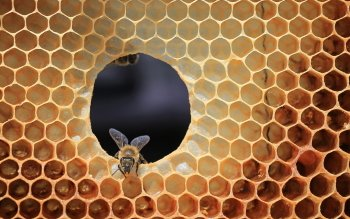 7 Honeycomb HD Wallpapers