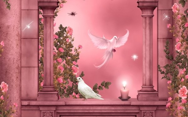 Artistic Dove Pink Rose Rose Pink Columns Candle HD Wallpaper   Background Image