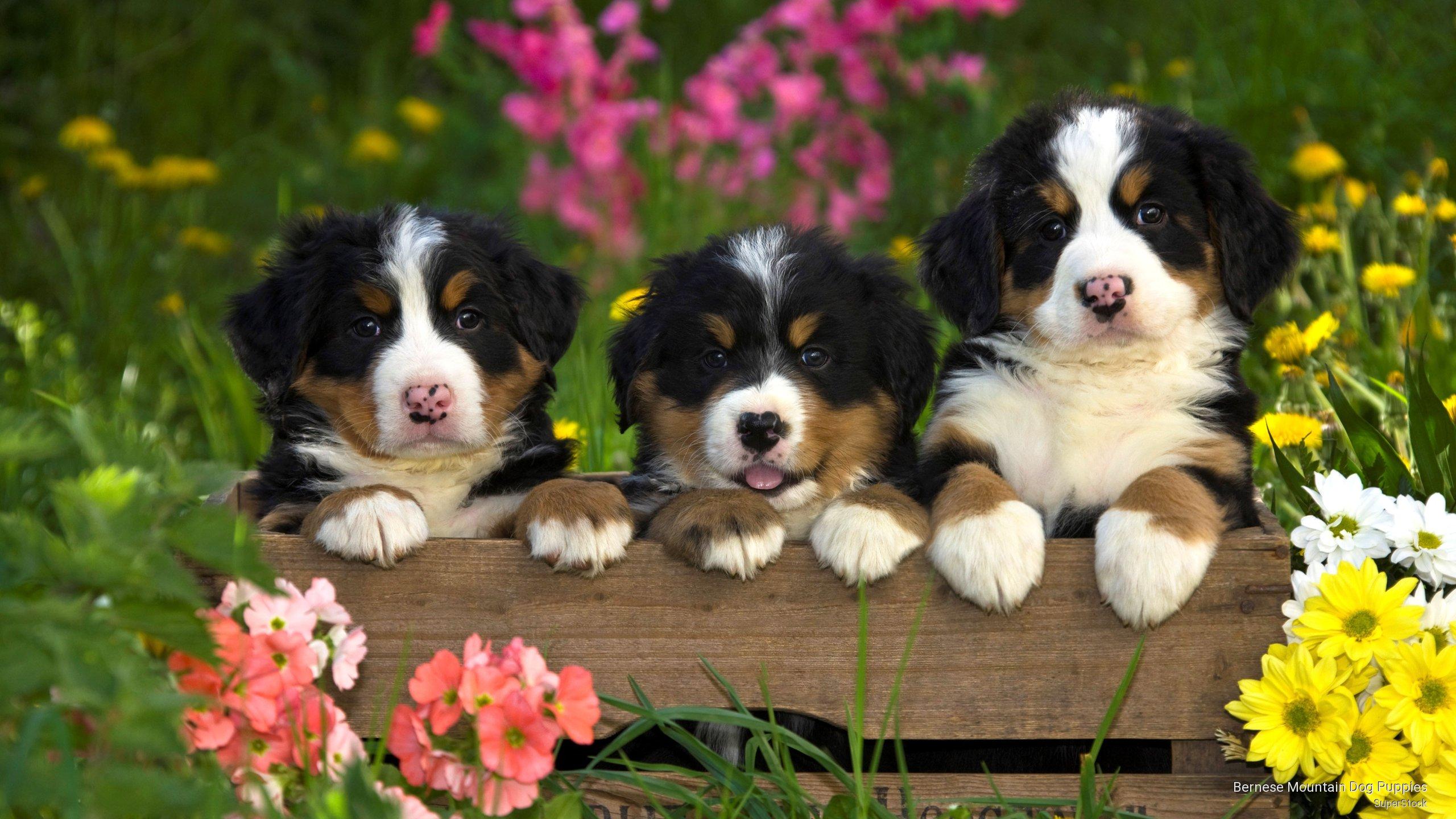 Cool D Wallpaper HD Dogs