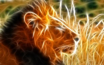 Animal - Lion Wallpapers and Backgrounds ID : 78739