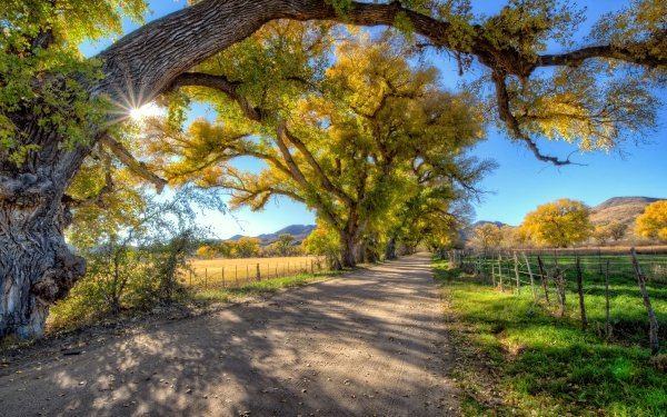 Hecho por el hombre Carretera Dirt Road Árbol Campo Cerca Fondo de pantalla HD | Fondo de Escritorio
