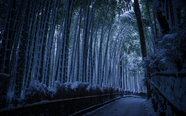 Earth Path Nature Winter Snow Forest Bamboo HD Wallpaper   Background Image