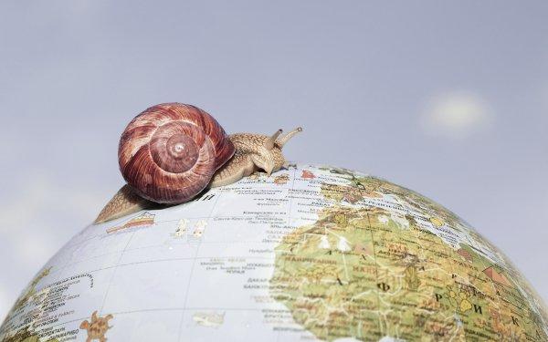 Animal Snail Mollusc Globe HD Wallpaper | Background Image