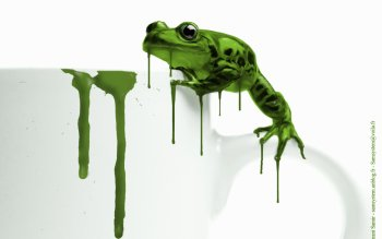 Animal - Frog Wallpapers and Backgrounds ID : 81307