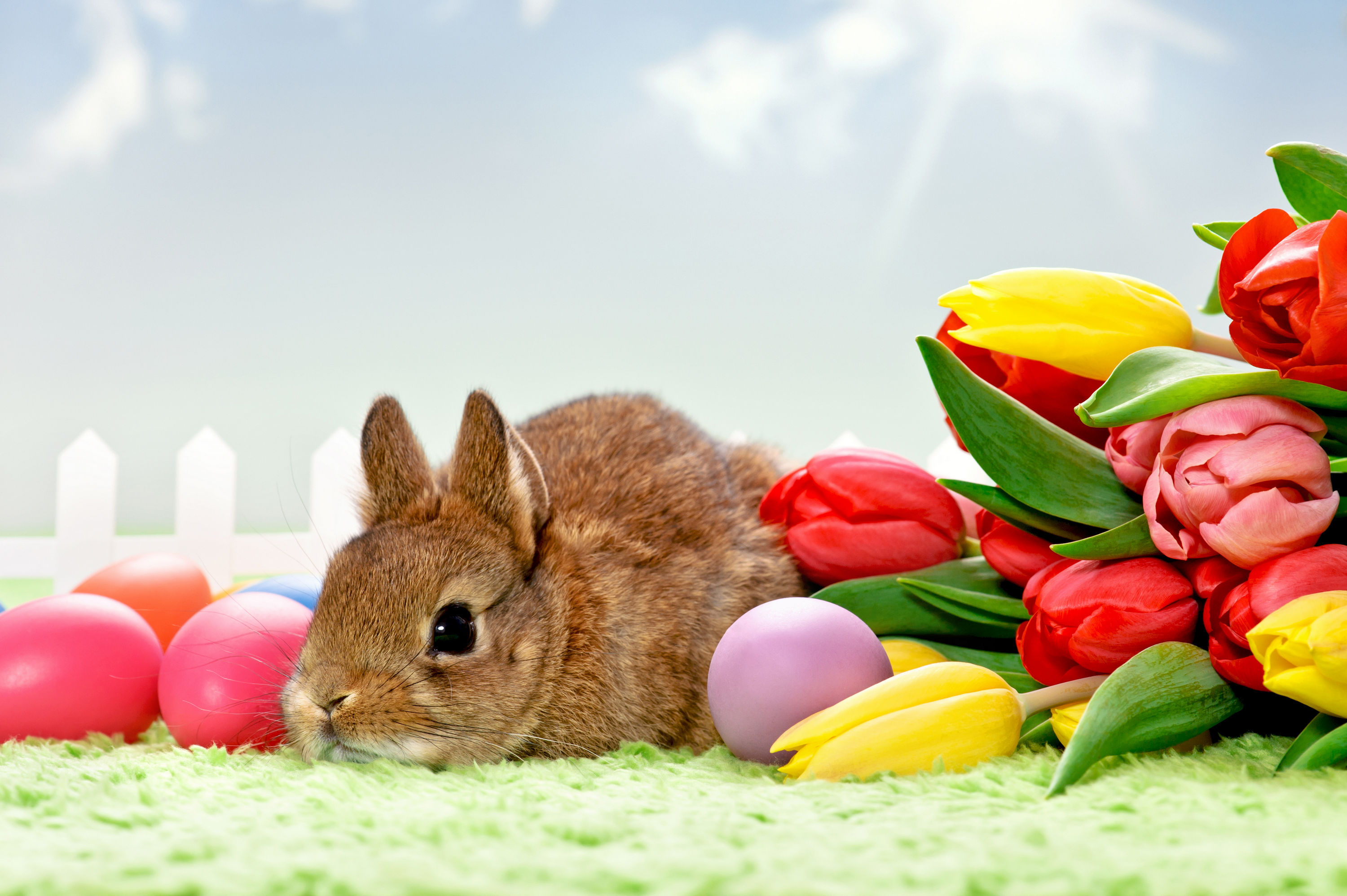 Easter bunny hd wallpaper background image 3000x1996 - Easter bunny wallpaper ...