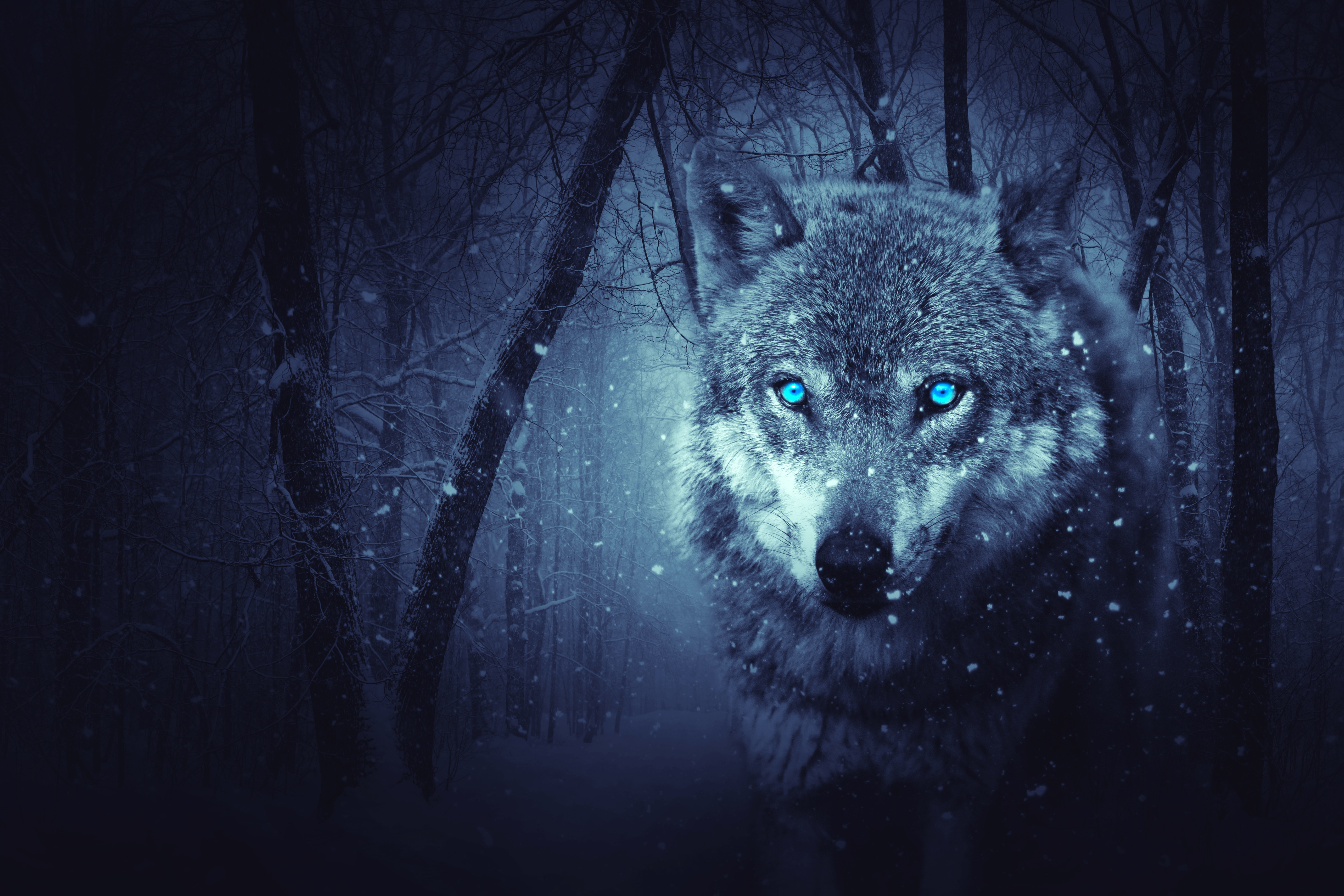 Fantasy Wolf in a Dark Winter Forest 5k Retina Ultra HD ...