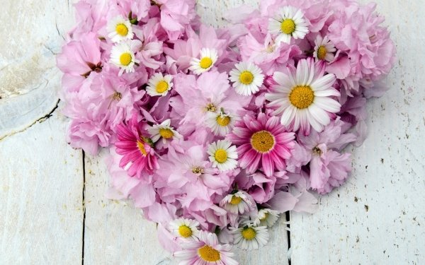 Earth Flower Flowers Camellia Chrysanthemum Heart-Shaped White Flower Pink Flower HD Wallpaper   Background Image