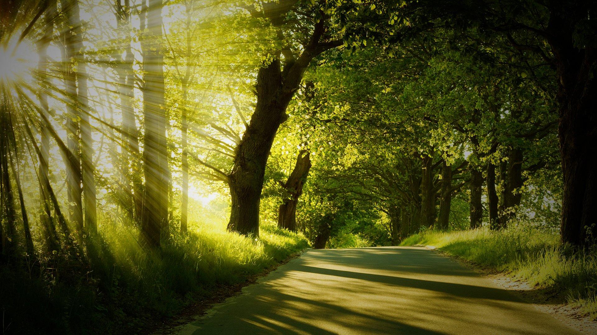 Bosque Fondo De Pantalla Hd Fondo De Escritorio