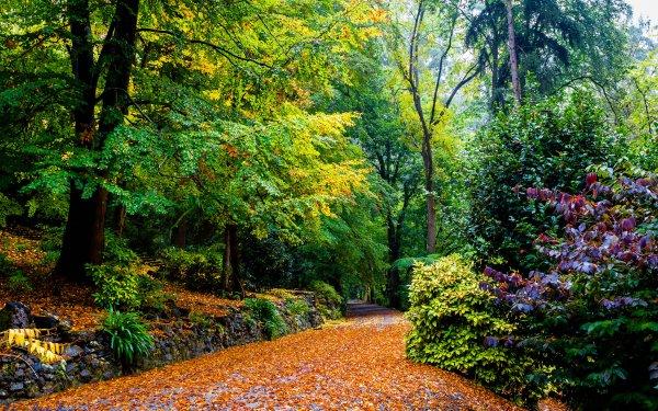 Photography Park Fall Tree Melbourne Australia Bush HD Wallpaper | Background Image