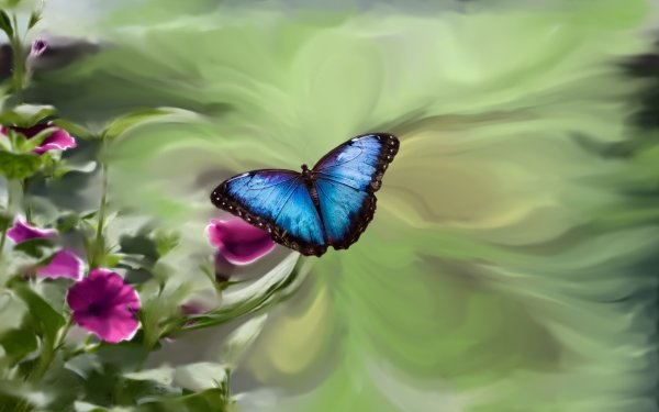 Artistic Butterfly Insect Flower HD Wallpaper   Background Image
